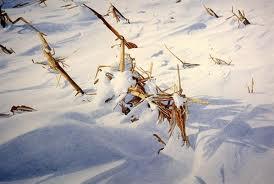 snow drift1.jpg