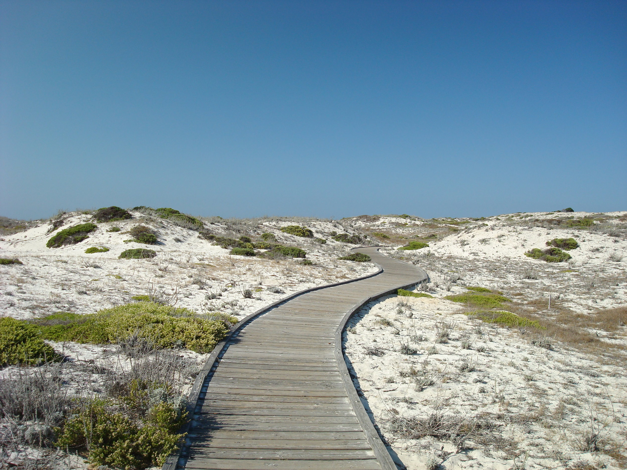 Wooden_pathway_at_the_Asilomar_State_Beach.jpg