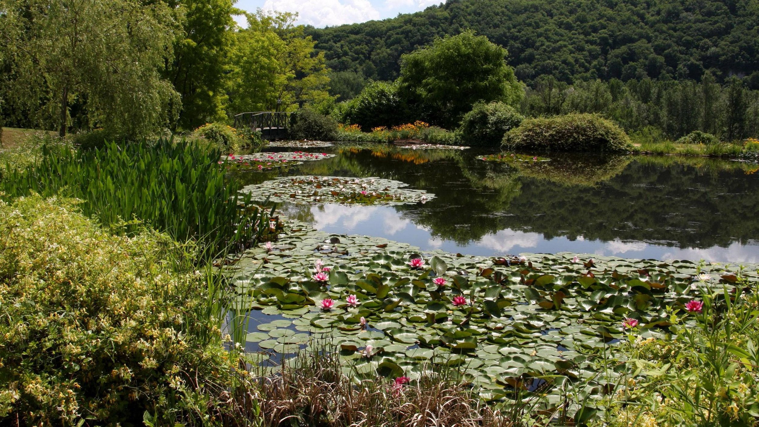 3840x2160-tree_nature_water_lilies_on_the_pond_forest_lily_water_pond-15330.jpg