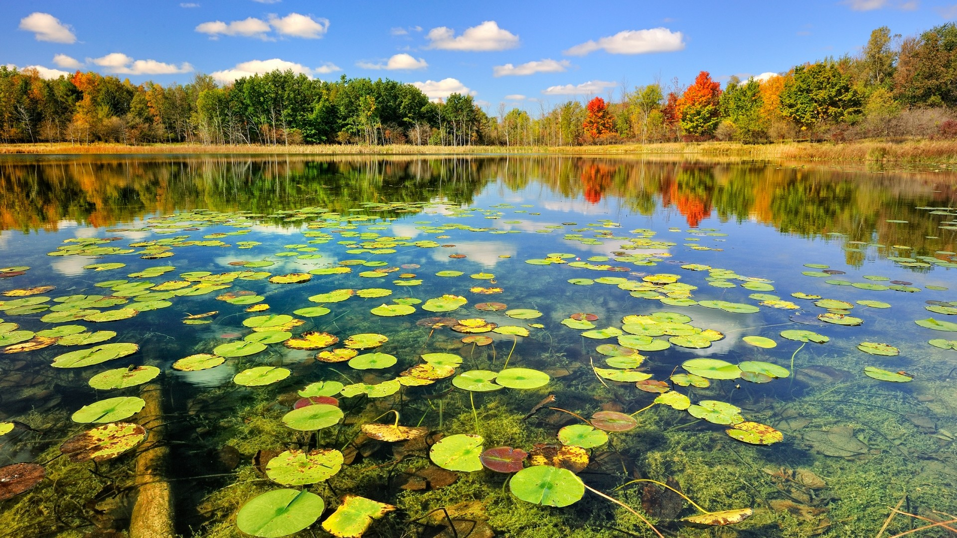 pond-wallpapers-14.jpg