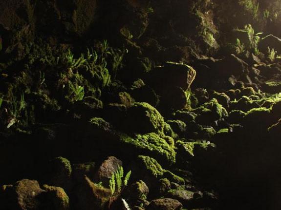 easter-island-cave-moss-101013-02.jpg