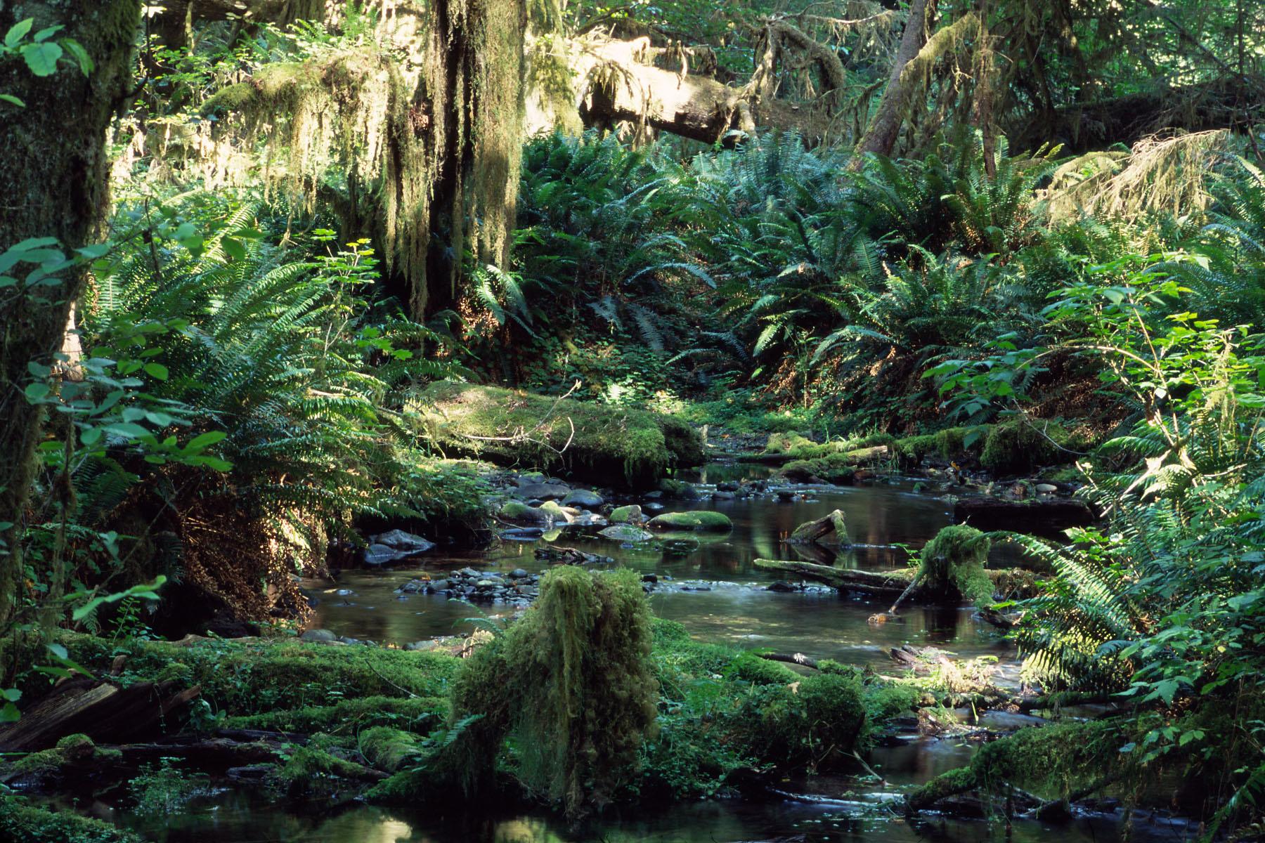 RainForest_1039.jpg