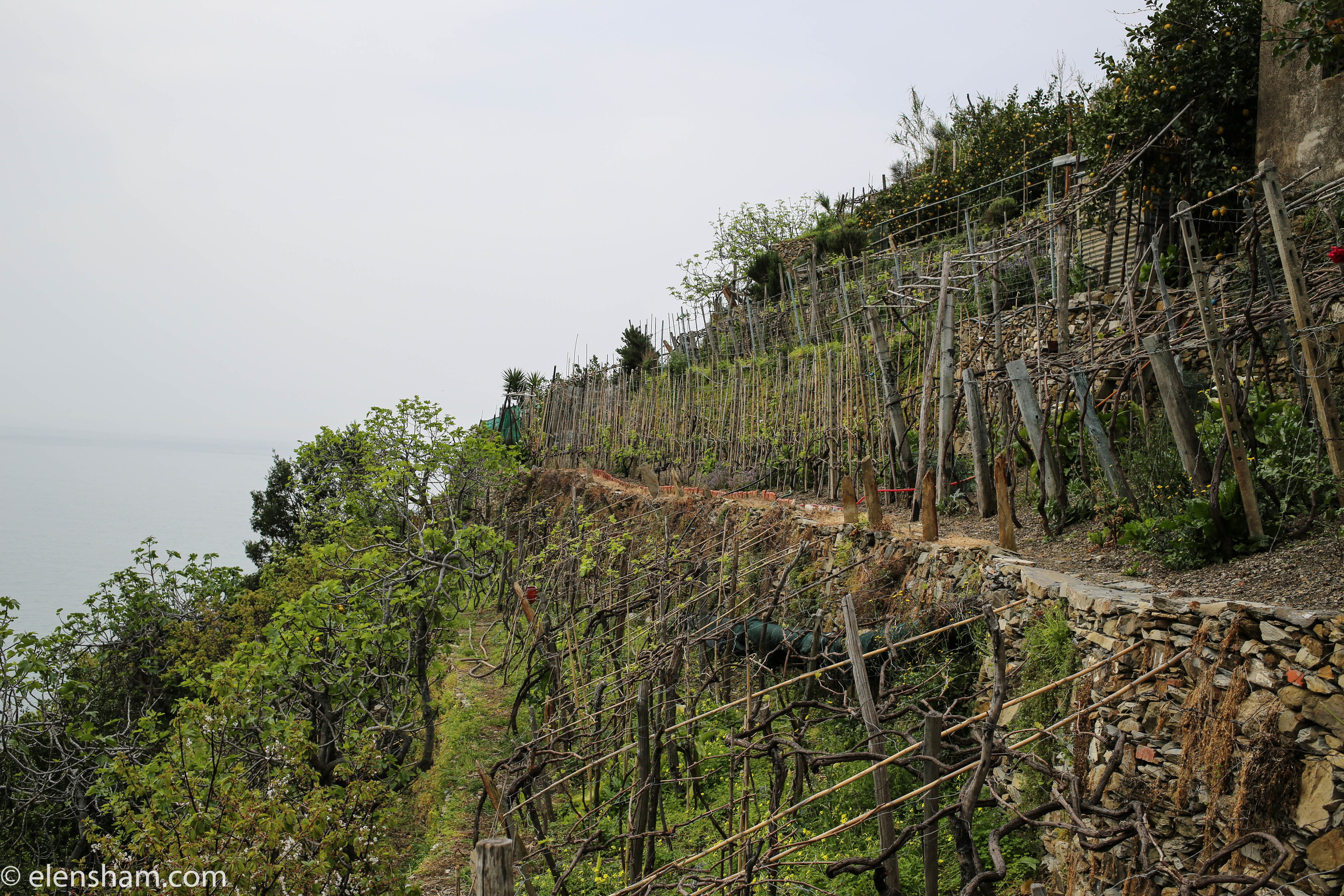 Vineyards on the way