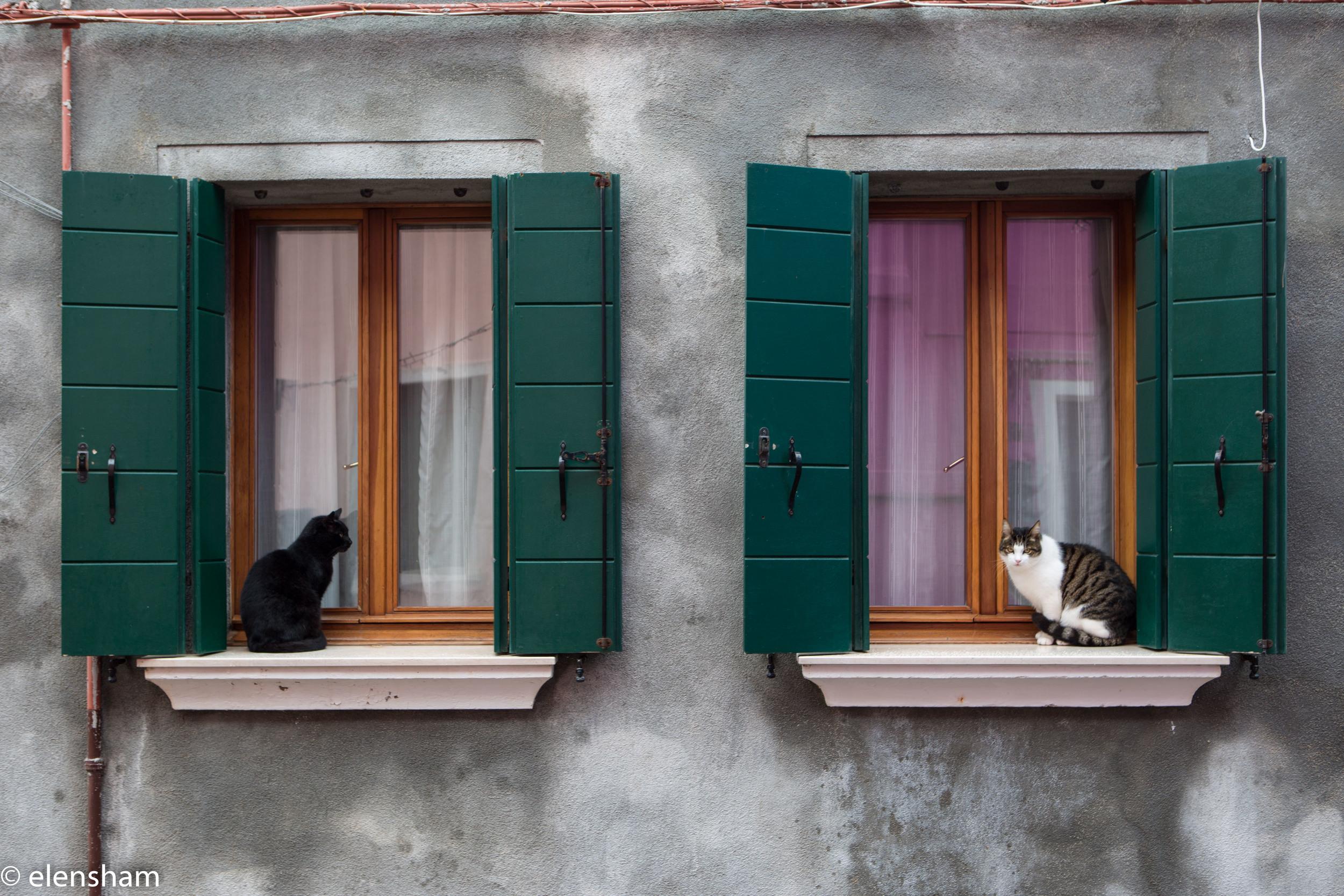 Even cats in Burano are cute!