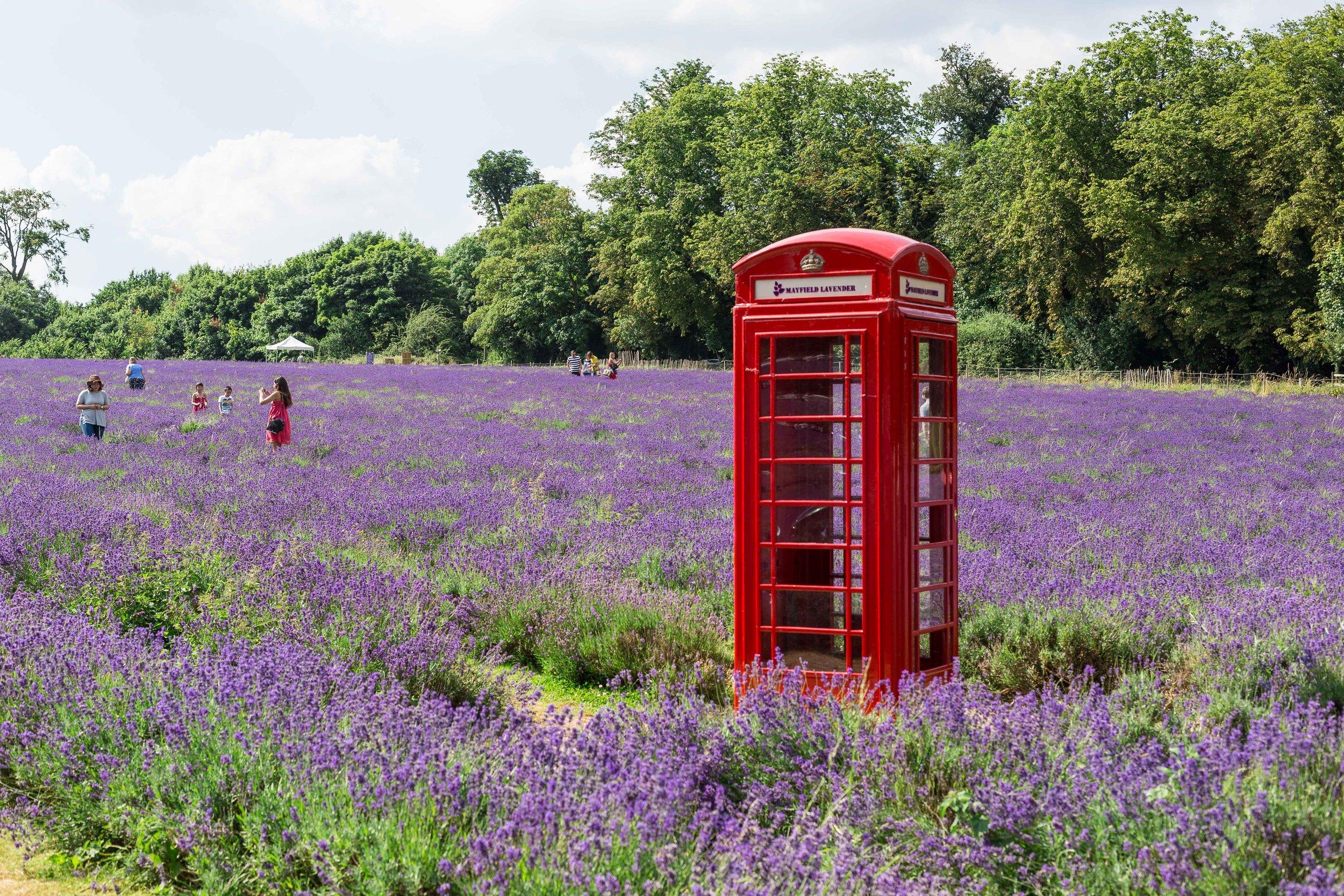 lavender phone booth