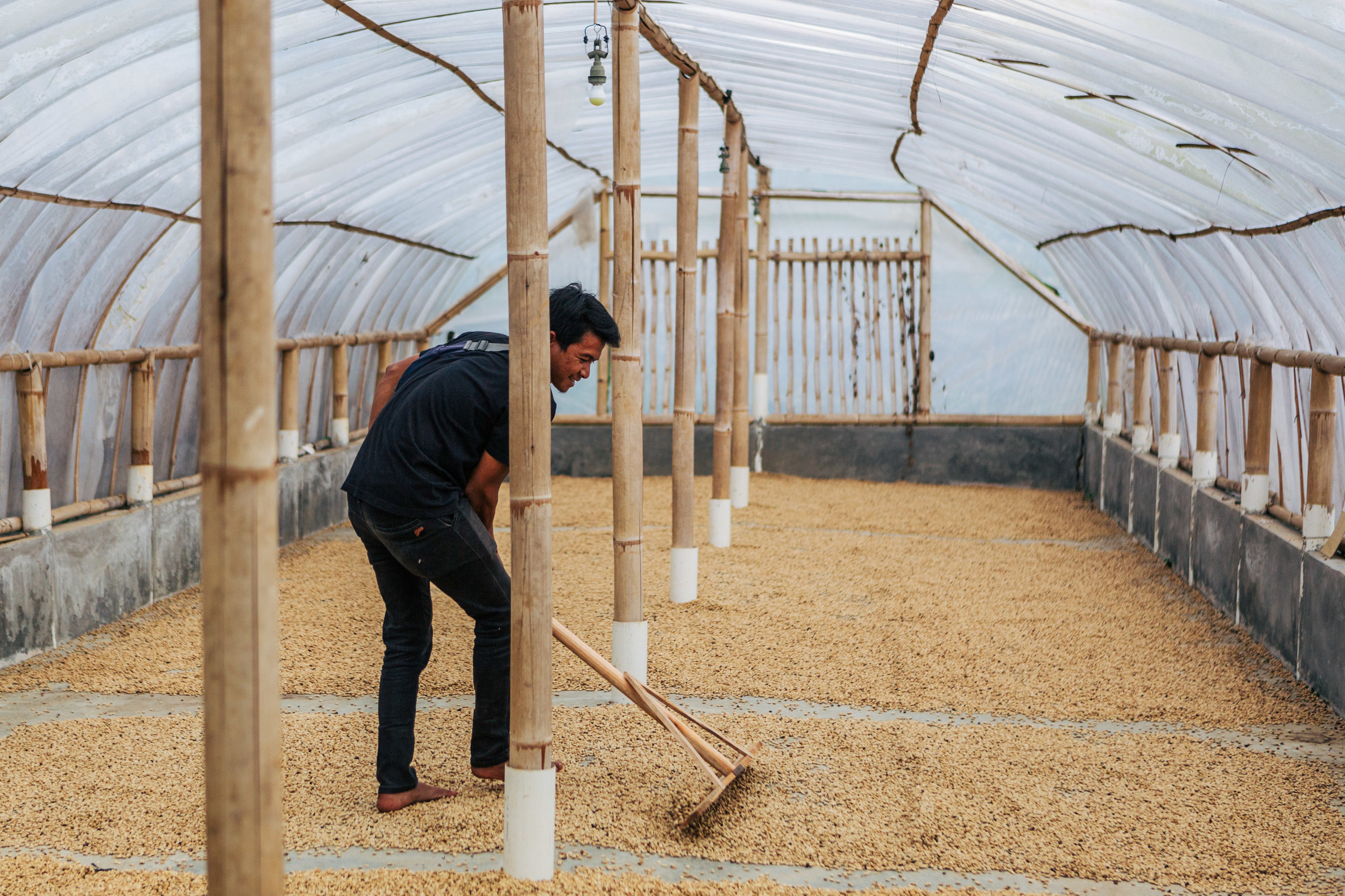 Coffee drying at wet mill in West Java