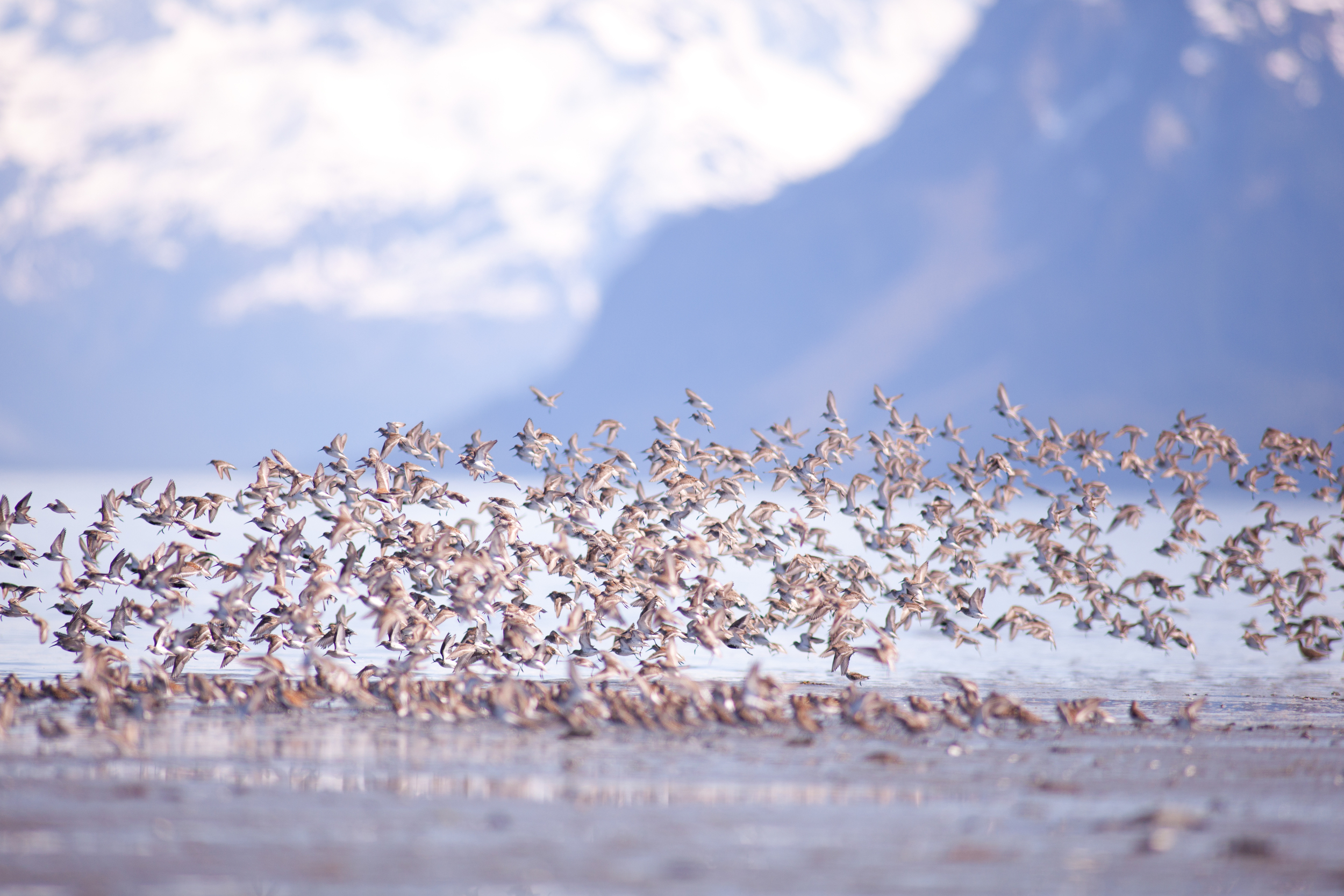 HaismanPhotography_ShorebirdFestival2014-1565.jpg