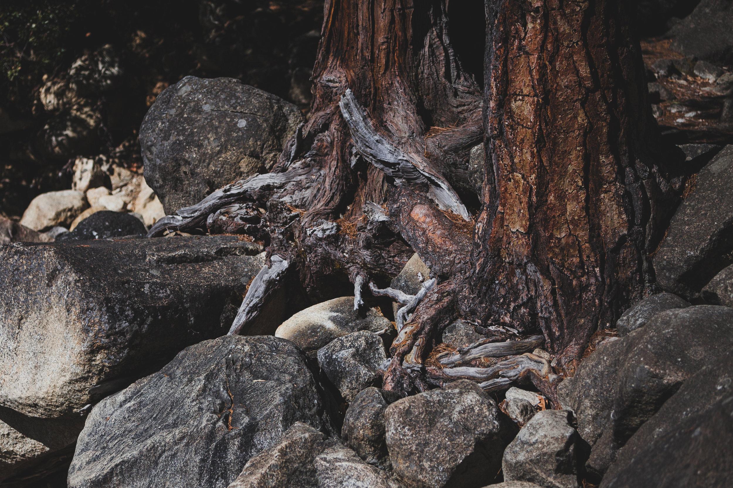 PauloLopez-Yosemite-11.jpg