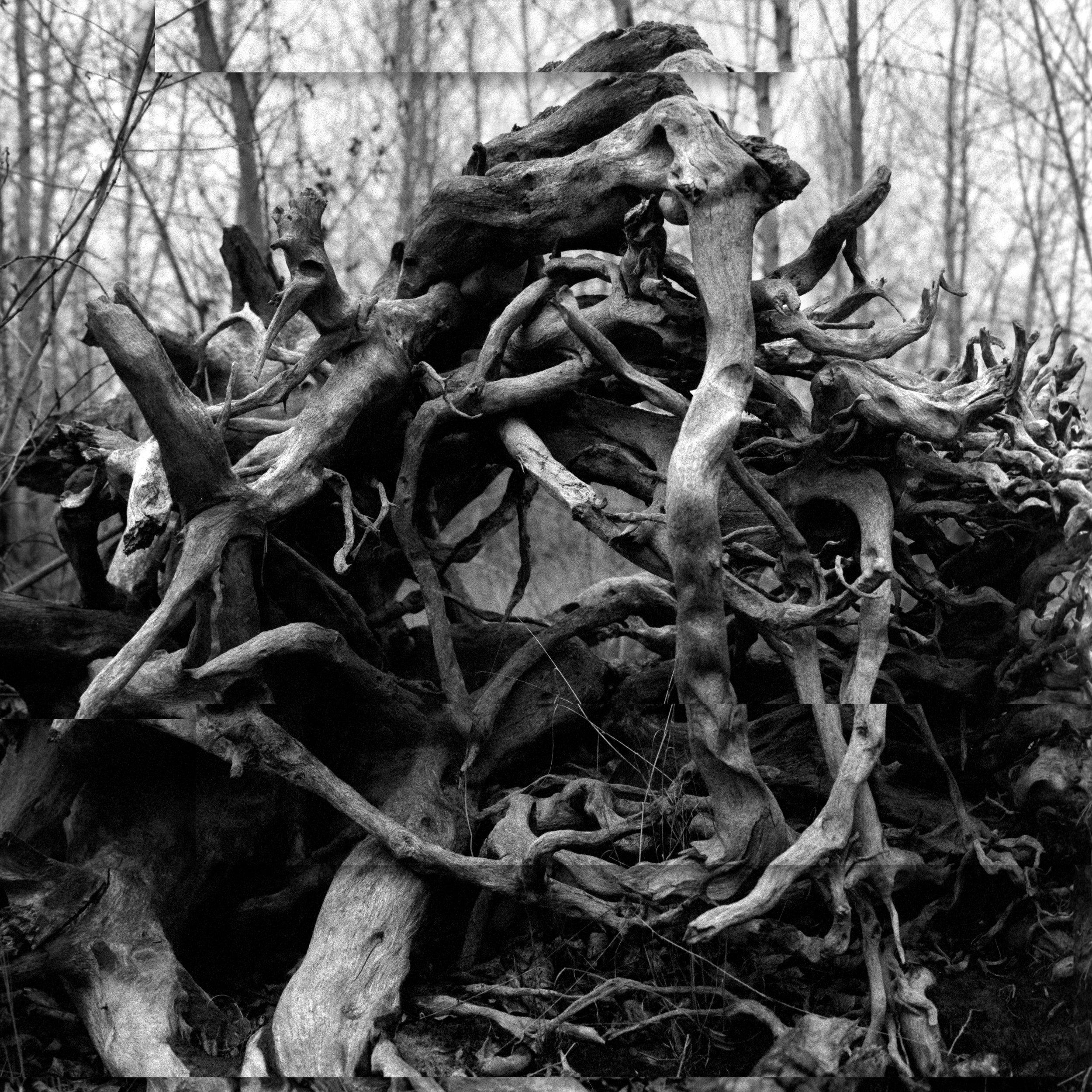 root_2*.jpg