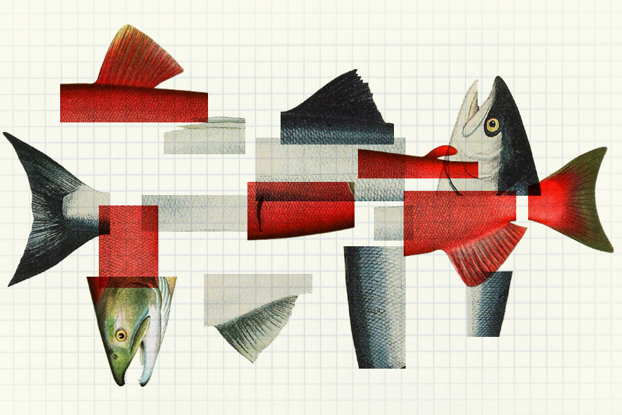 Reinventing the fish