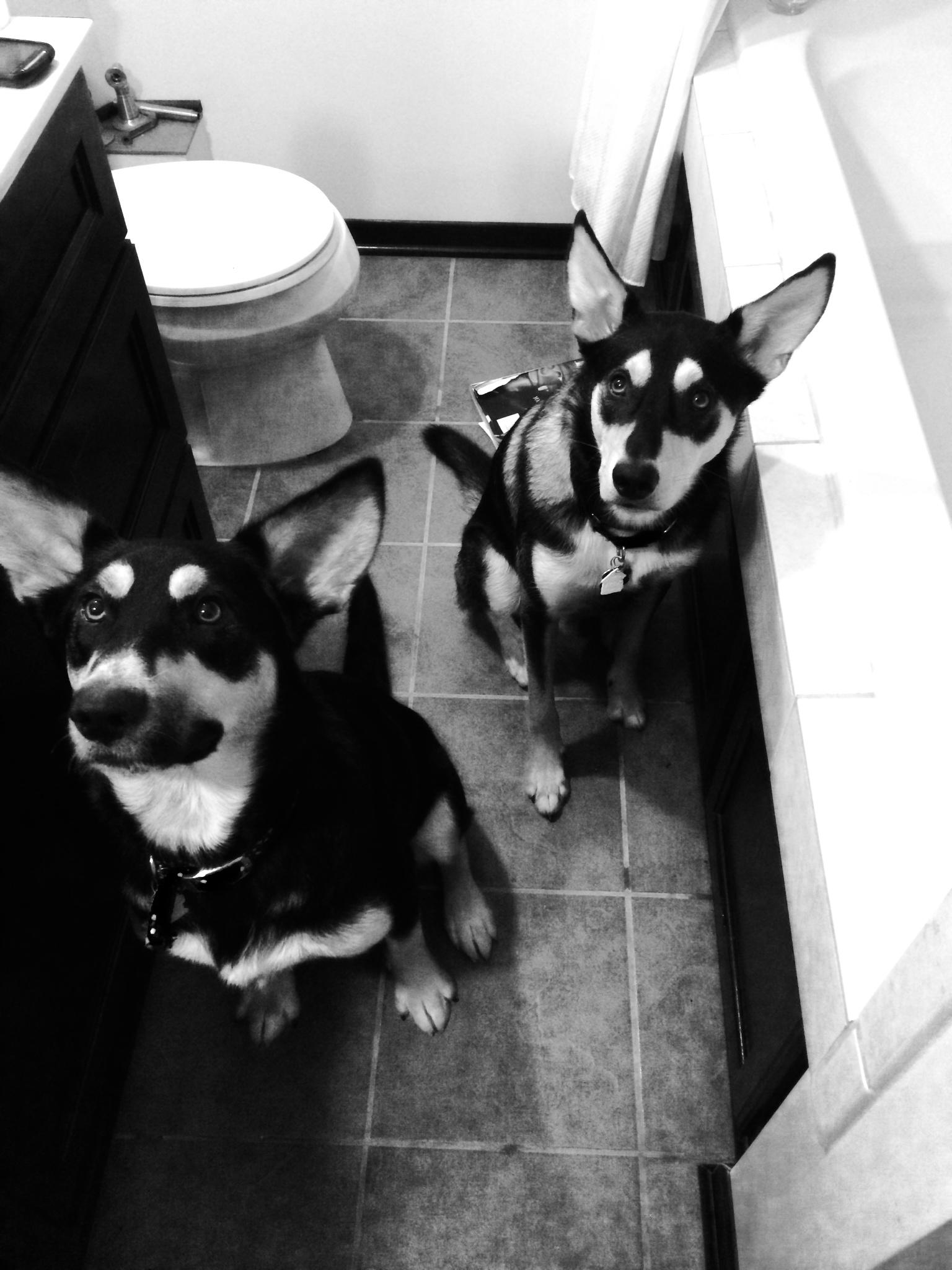 Bathroom Puppers.JPG