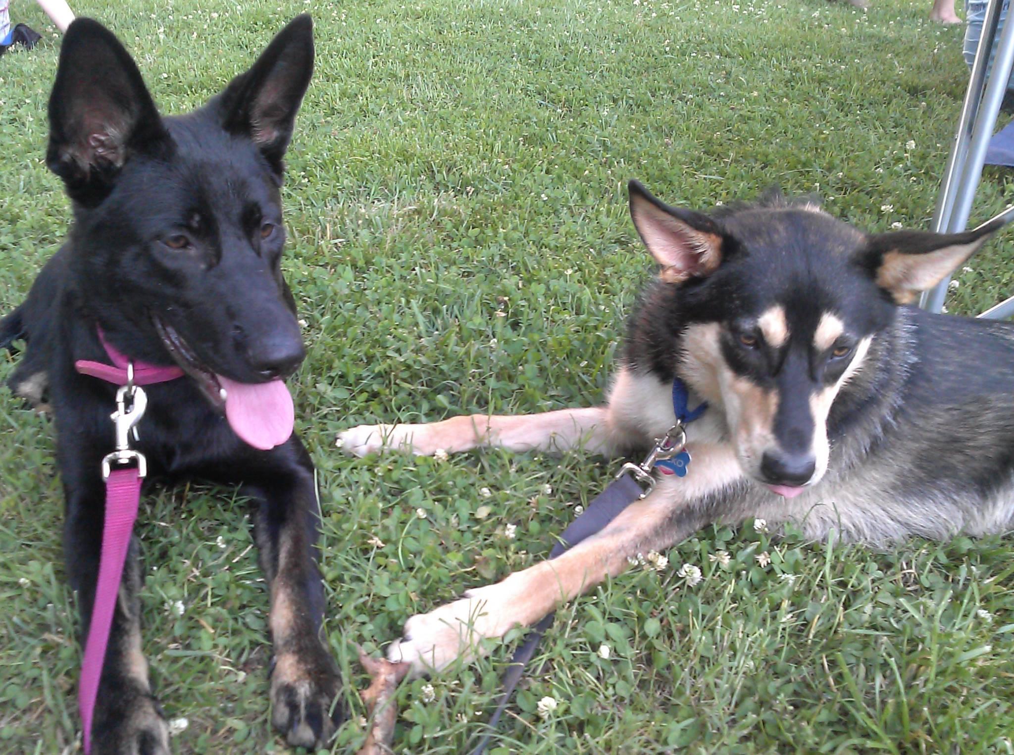 Bella & Nicko