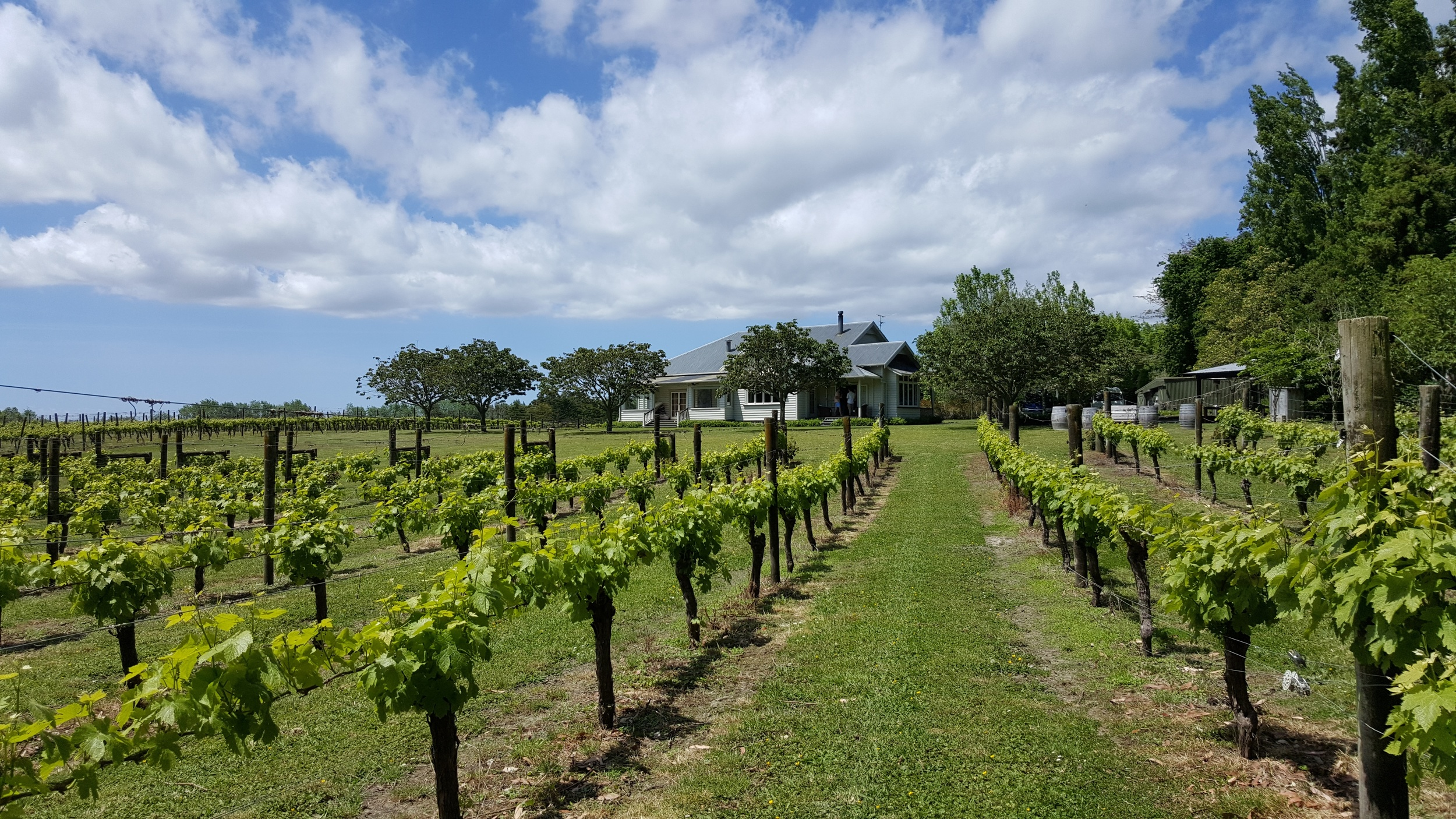 Kumeu Kerr Farm Vineyard