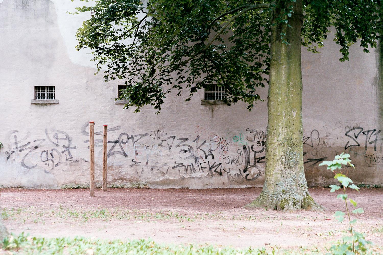 Giving Tree. Leica M6 TTL w/ 50mm Cron Version III.