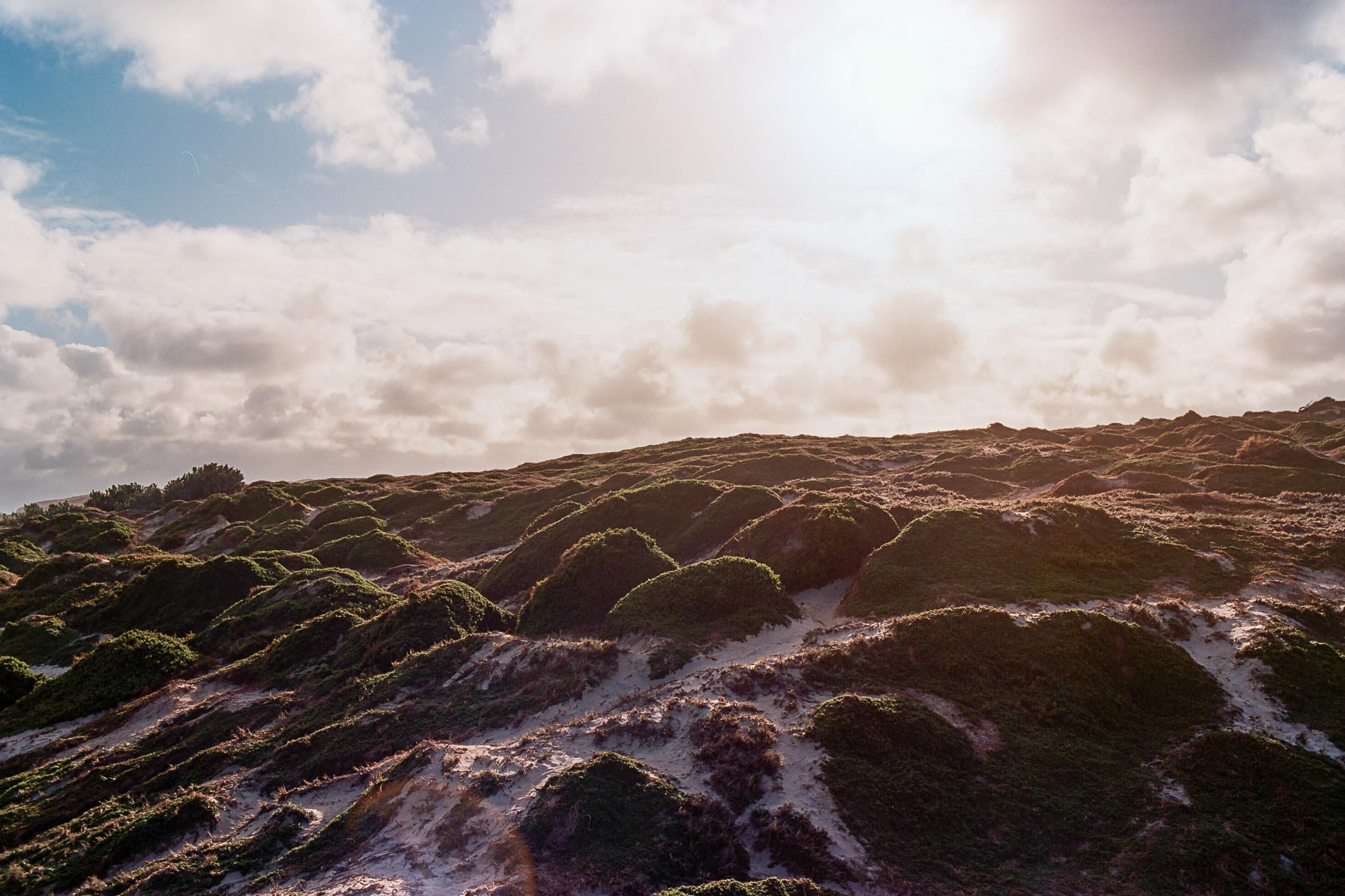 Kangaroo island sealsAA011A.jpg