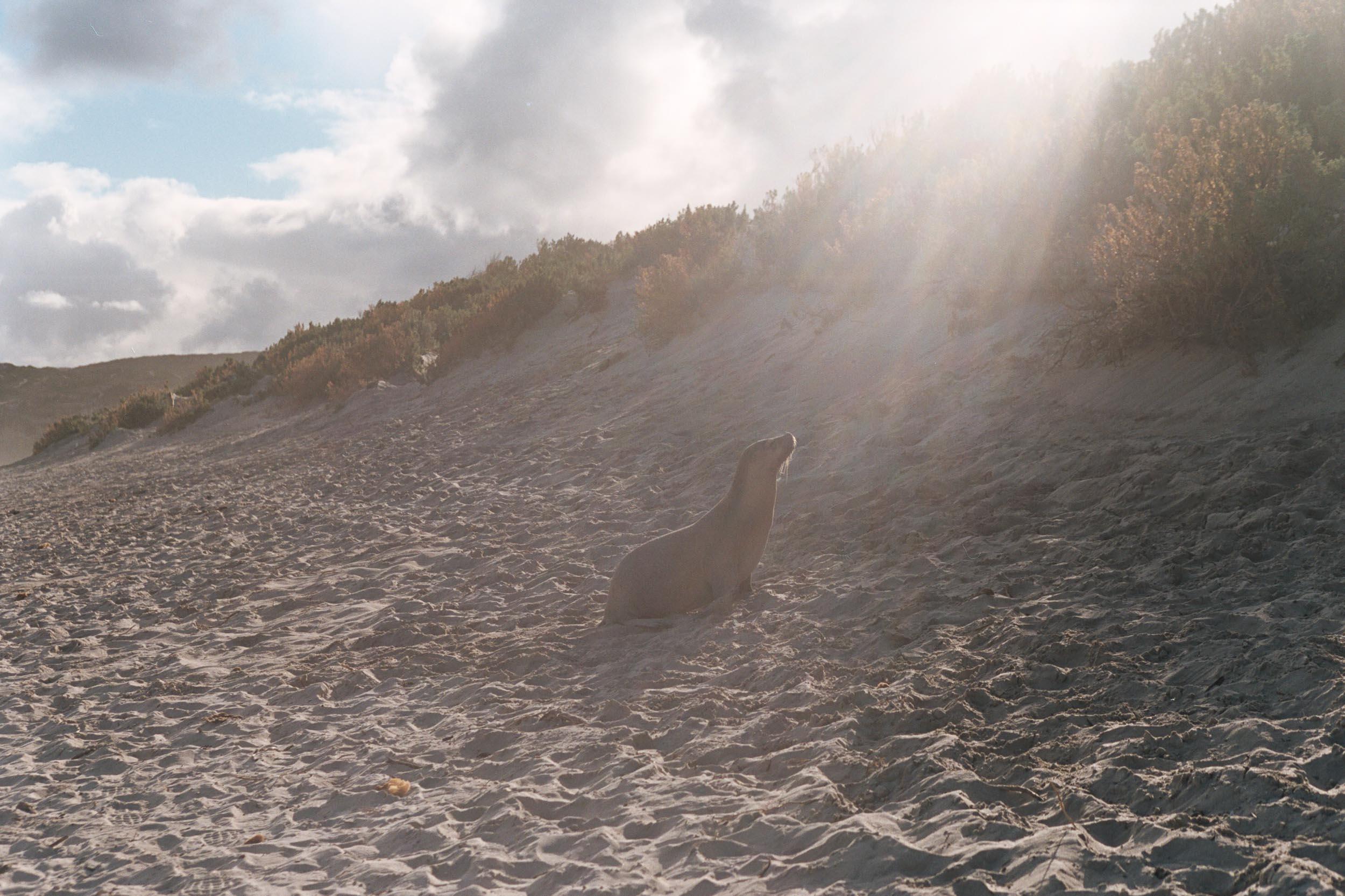 seal beachAA029.jpg