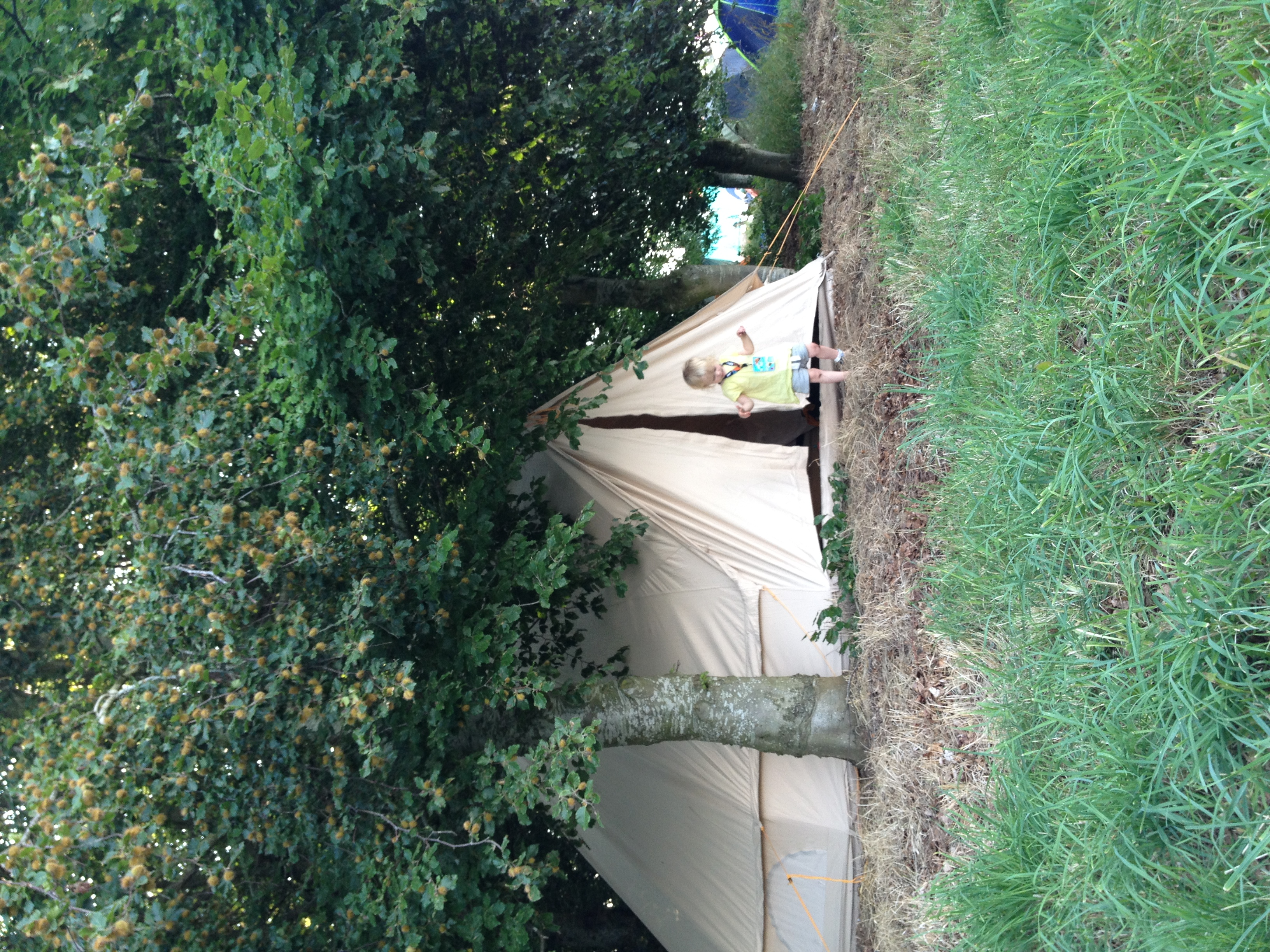 Tent in the shade at womad