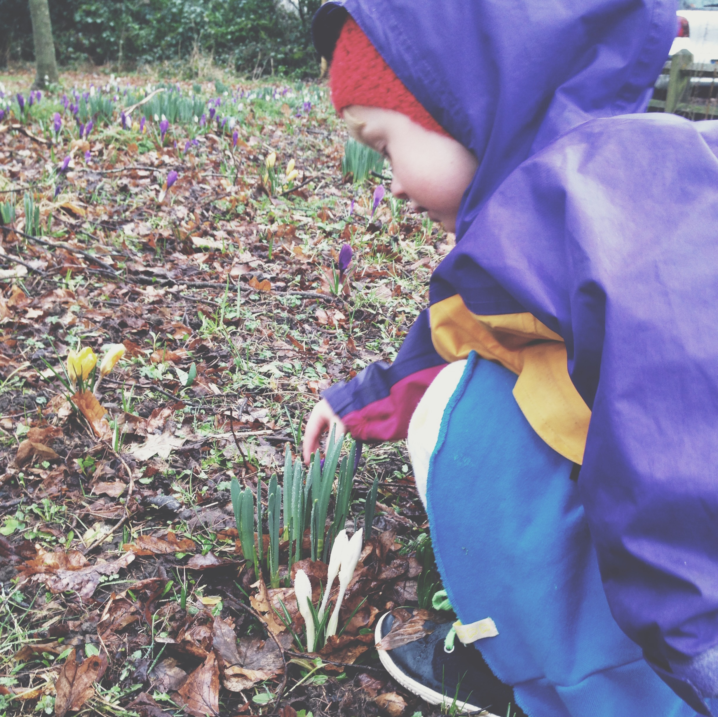 (She's singing to the crocusses!)
