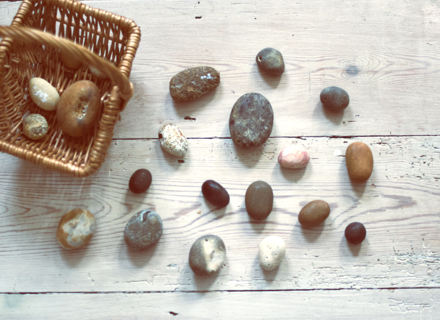 Sea eggs | Seeds and Stitches blog