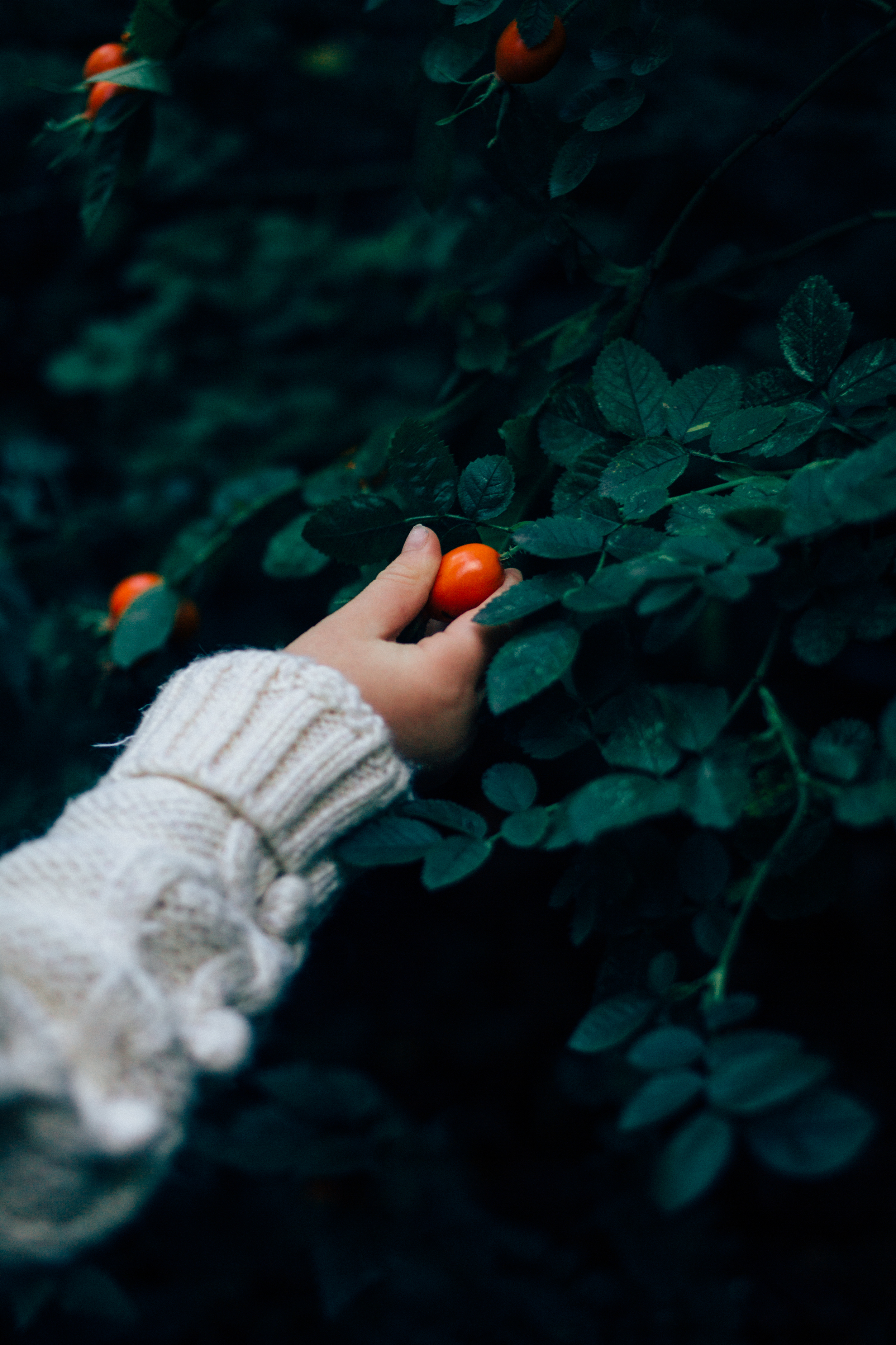 walk in the woods | Seeds and Stitches blog-28.jpg