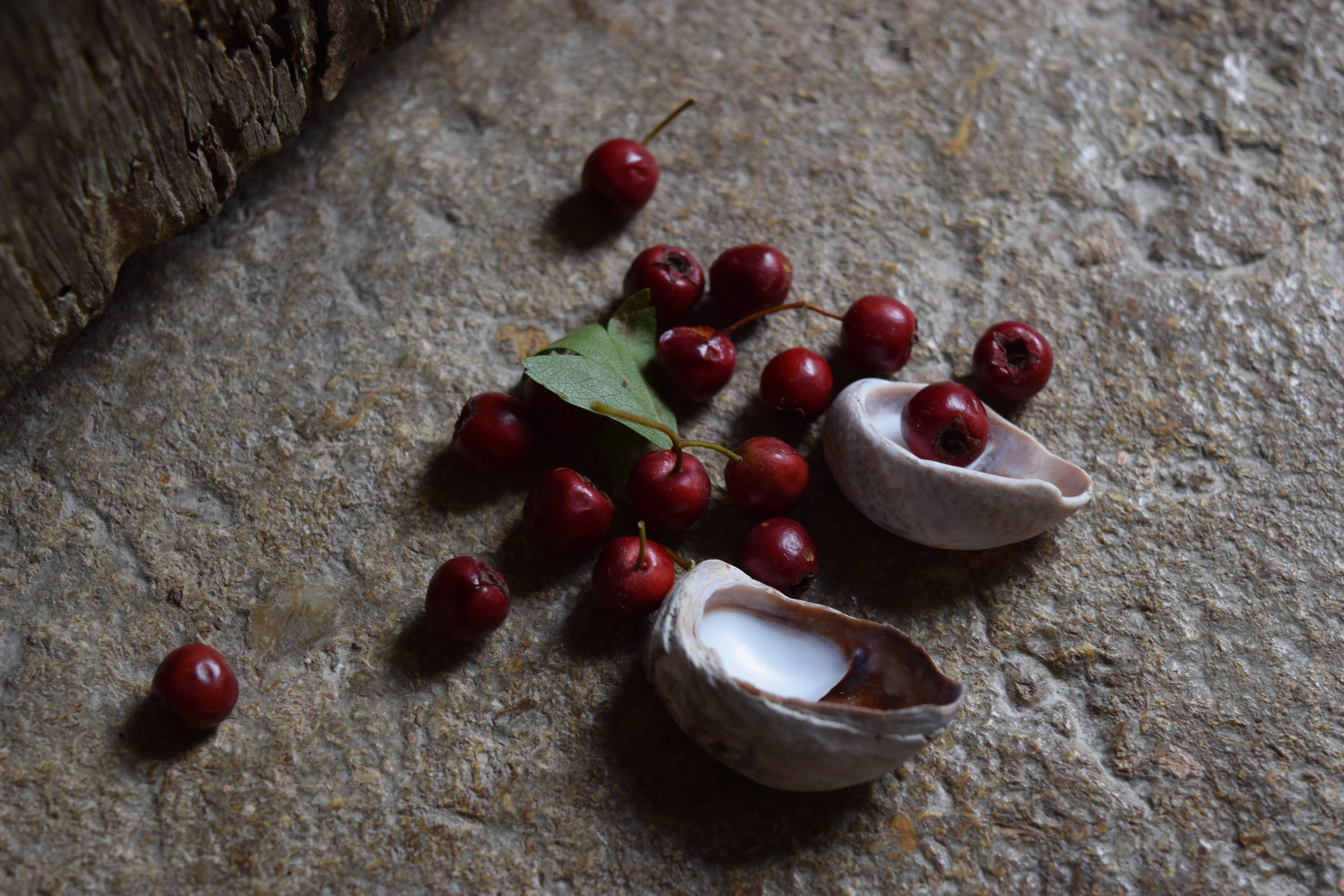 Hawthorn. Potion for a broken heart by Natasha Richardson | Seeds and Stitches blog