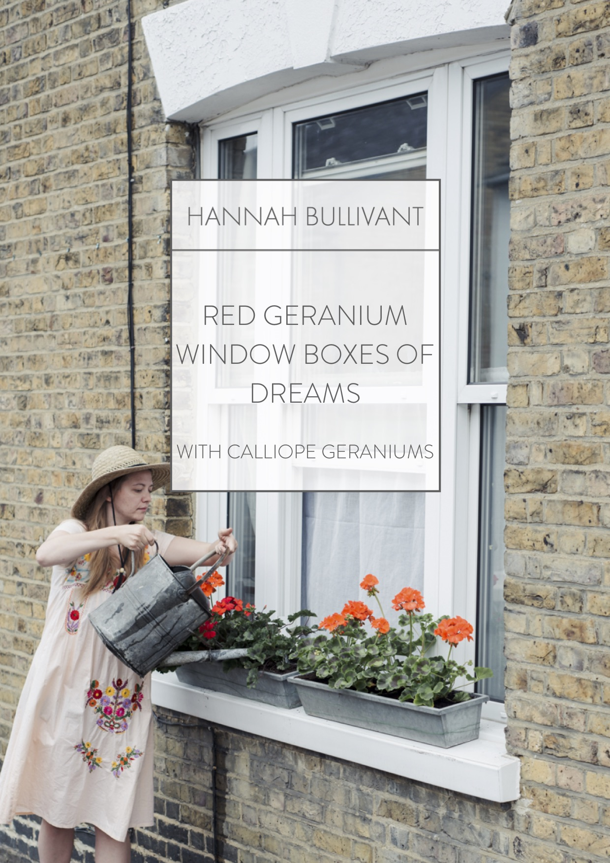 How to plant Red Geranium window boxes of dreams!