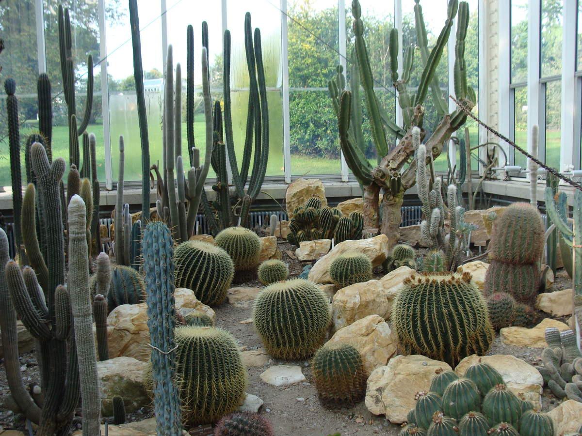 Botanical Gardens, Geneva