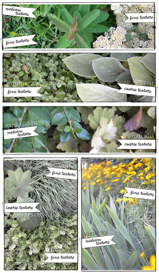 plant+textures+in+photos.jpg