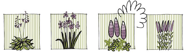 plants+in+a+row.jpg