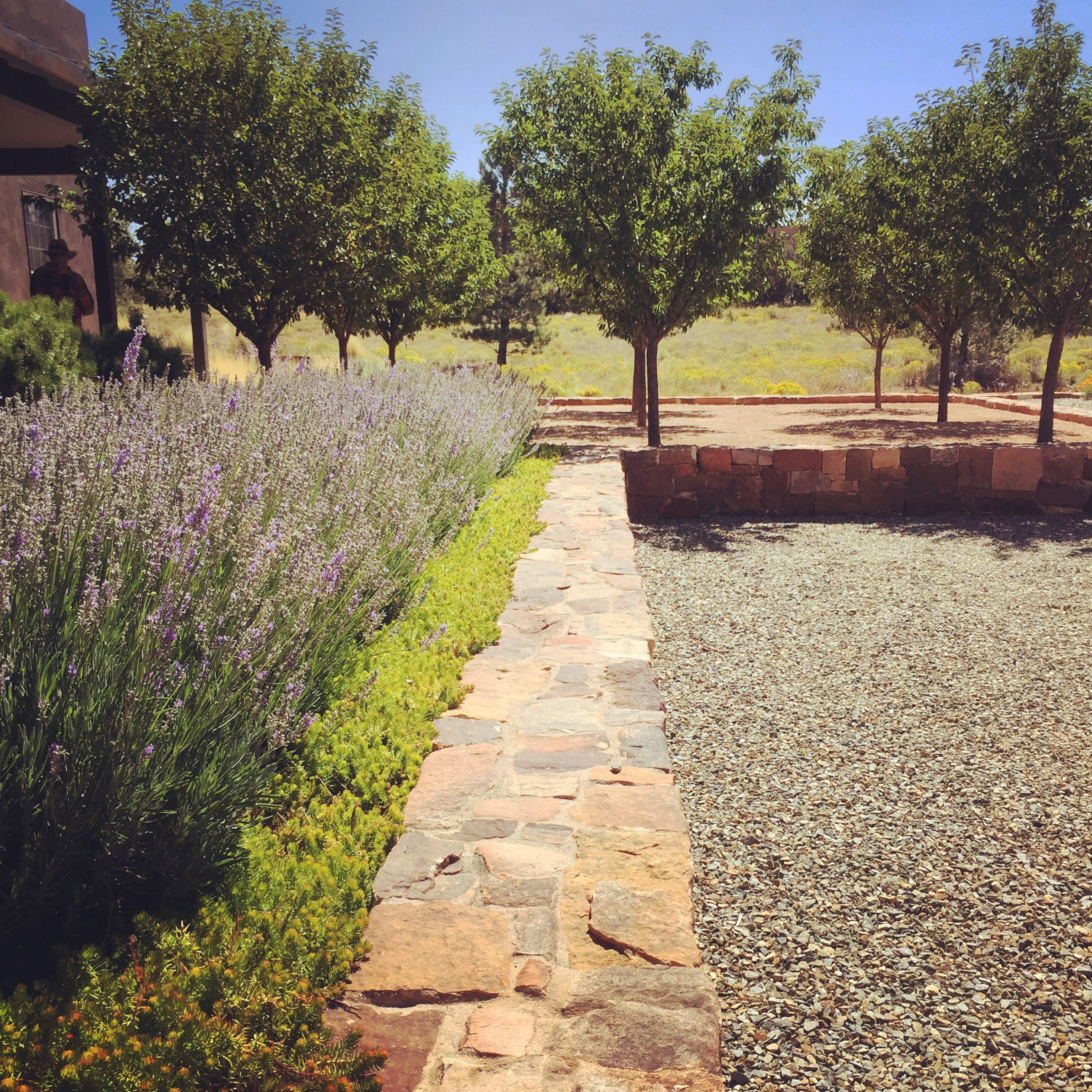 These lavender photos were taken in Santa Fe, New Mexico.