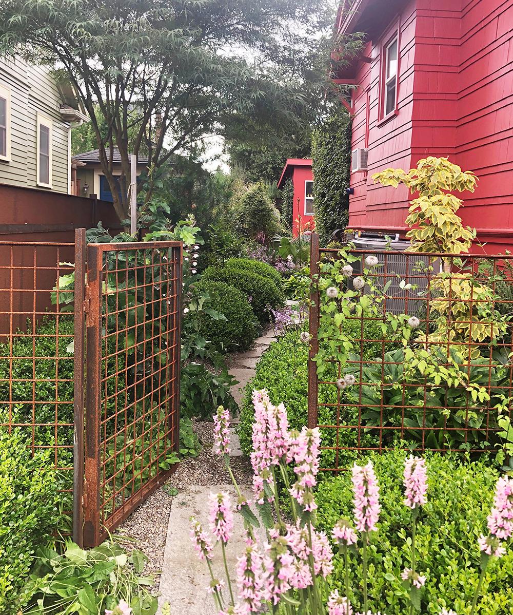 A lush side yard in Seattle, Washington
