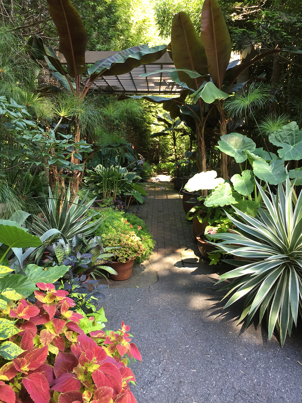 A lovely pergola and tropical plant containers add spark to this side yard in Boston, Massachusetts