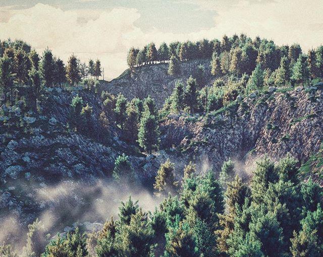 Misty . . . . #Cinema4d #c4d #maxon #3d #render #Photoshop #adobe #graphics #Still #Motiondesign #motiondesigner #Worldmachine #terrain #generation #Octane #otoy #terrain #fog #mist #light #stylised #cool #calm #illustrative #worldcreator #forester #mountain #trees