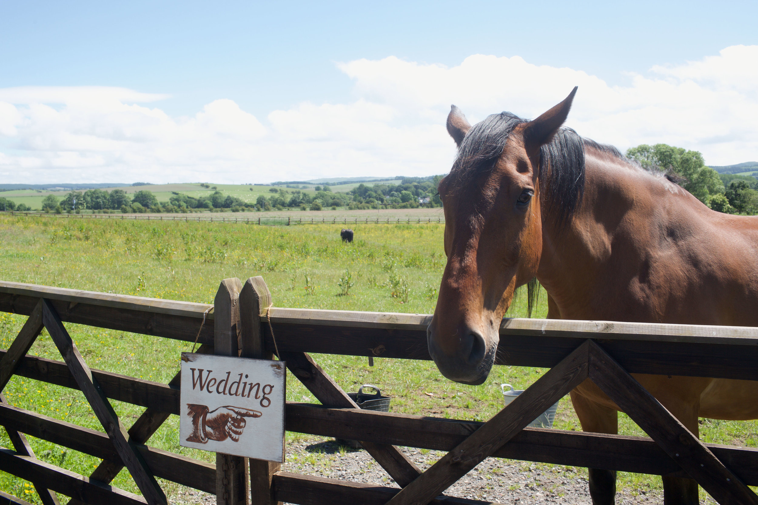DALDUFF_FARM_COUNTRY_WEDDING_JASMINE_PHIL_PJ_PHILLIPS_PHOTOGRAPHY_1.jpg