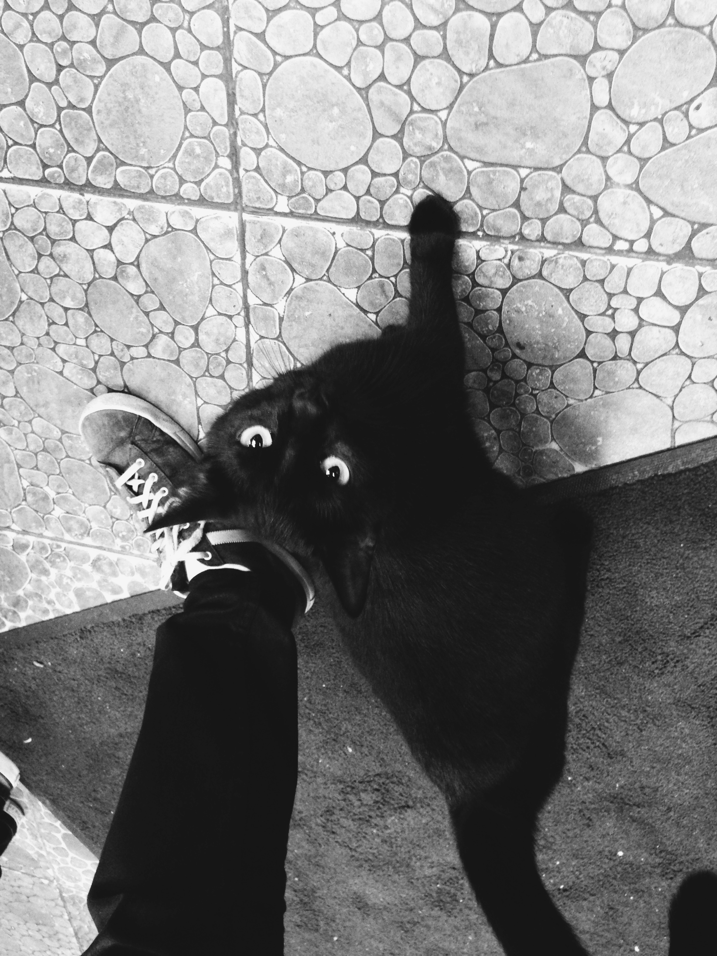 """Giant black cat shows up late at night at 24/7 Shawarma place, that also lists """"Crude Oils"""" as a main dish on the menu"""
