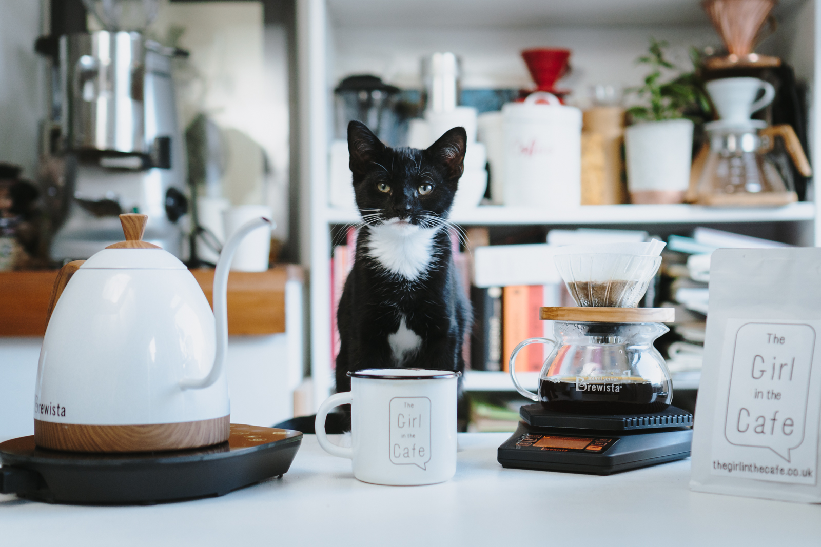My kitten   Macchiato   (mostly black with a touch of white) and serious about coffee!  Photo by his awesome Aunty  Zsuzsa Zicho!