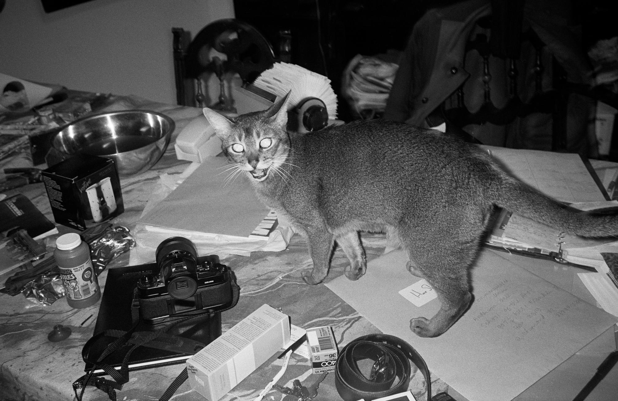 Kitu the cat explores table at artist Hunt Slonem's studio on Houston Street. (1988)