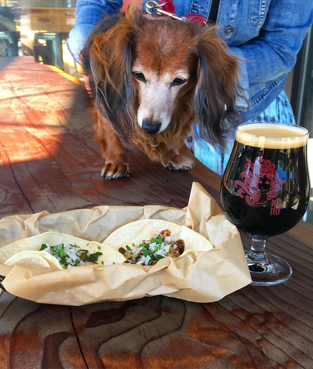Taco Trivia and Dog.jpg