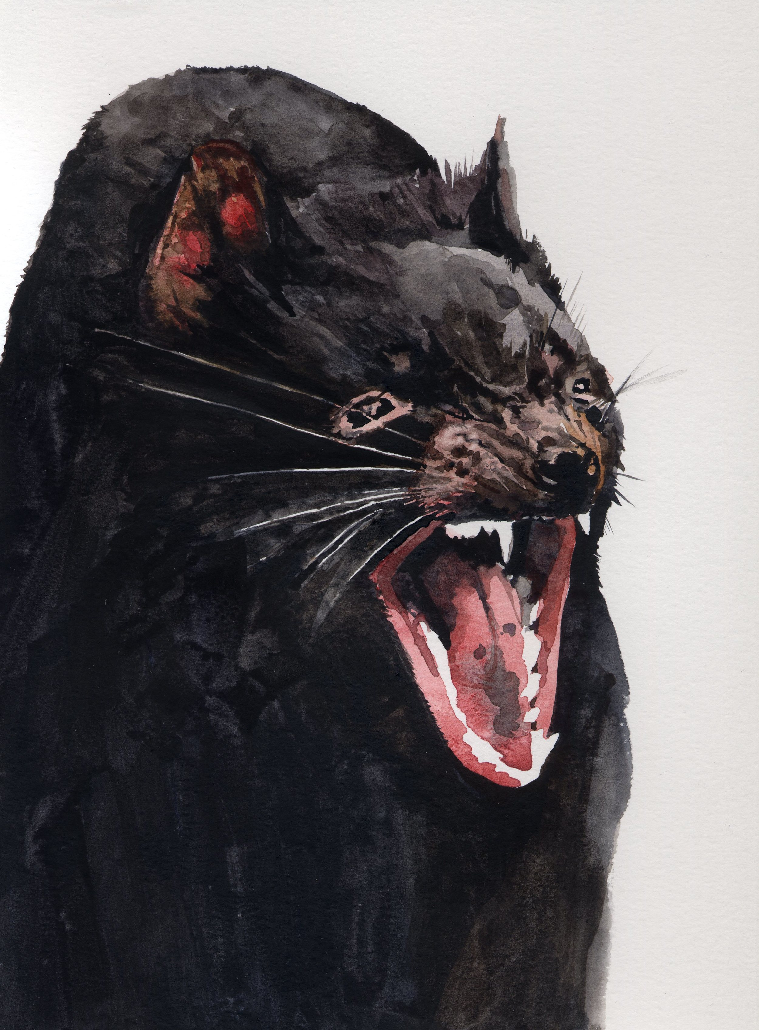 Tasmanian Devil.jpg