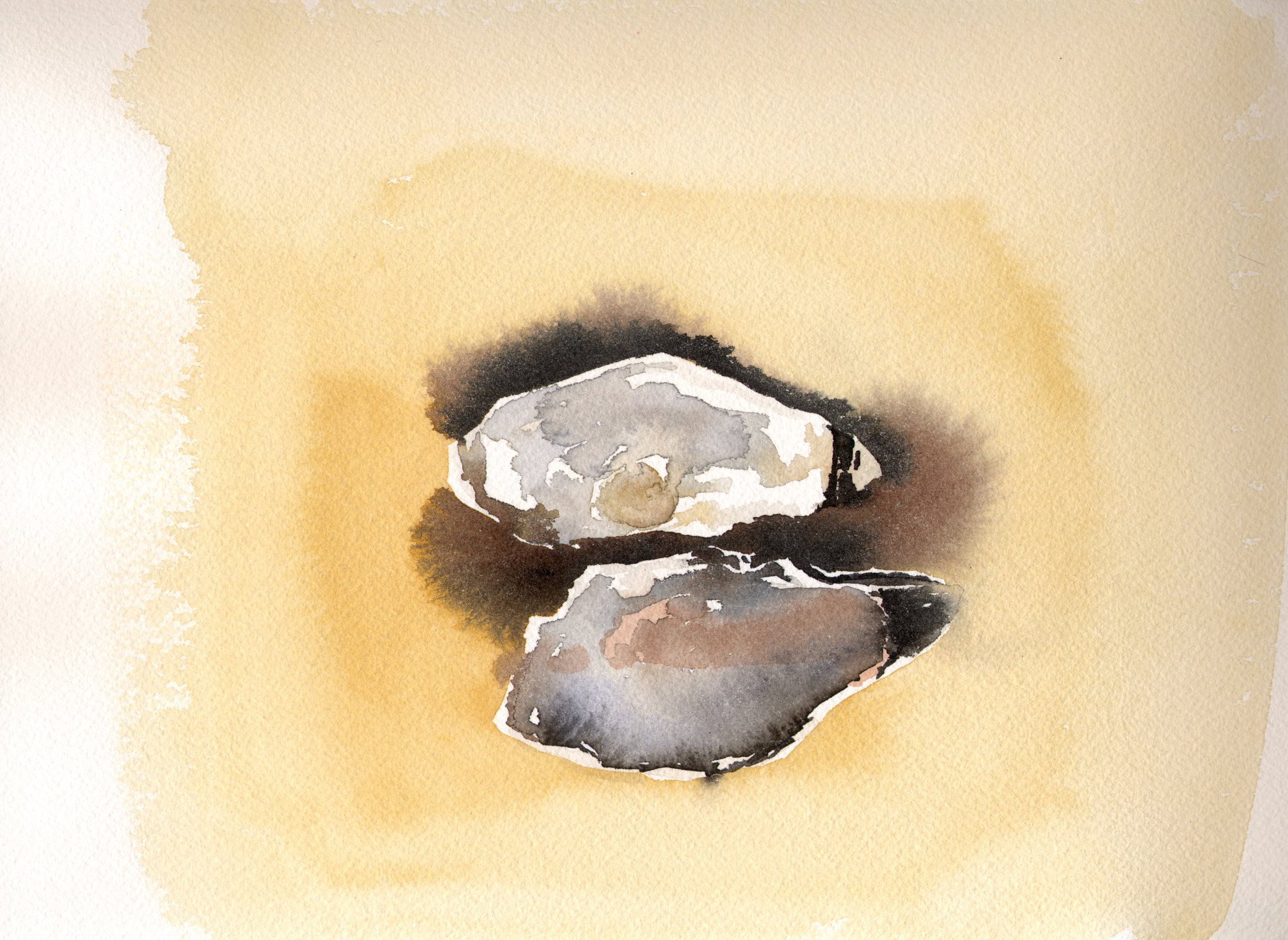 Watercolor Oyster Shells 3.jpg