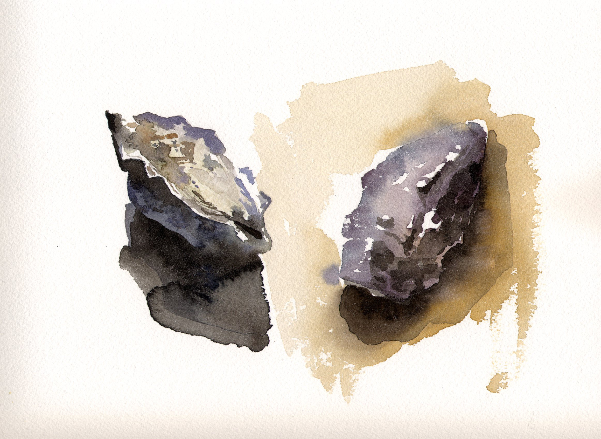 Watercolor Oyster Shells 1.jpg