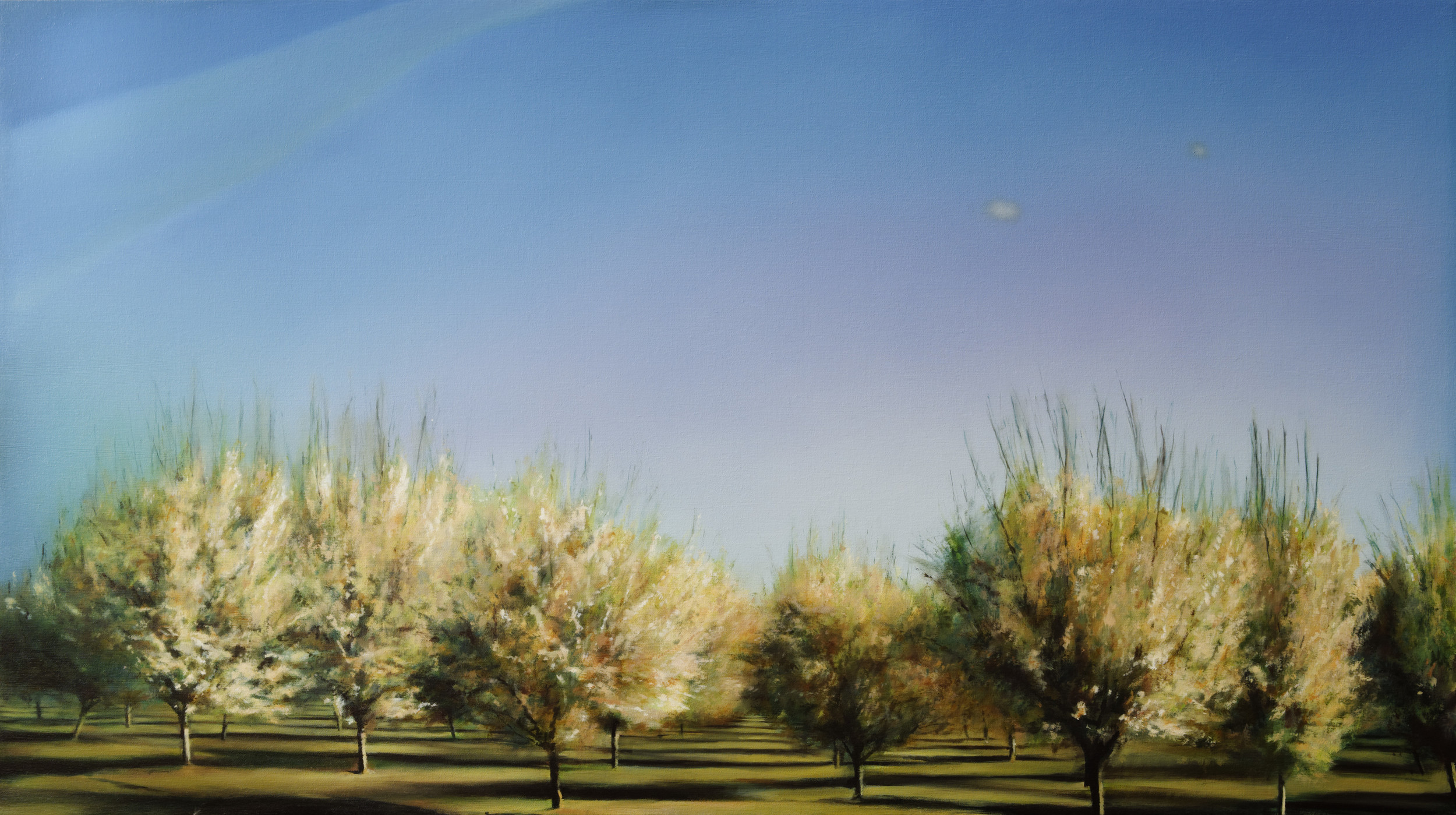 "orchard 2   •  28"" x 50""  oil on canvas  2012"