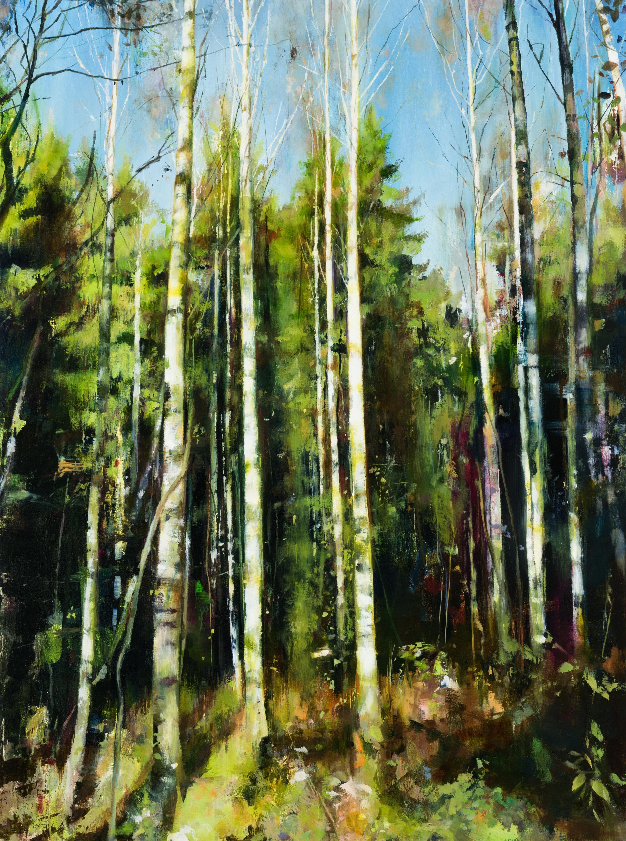 """birch  •  40"""" x 30""""  oil on canvas  2017"""