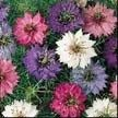 3-Nigella-Persian-Jewels-e1519407019392.jpg