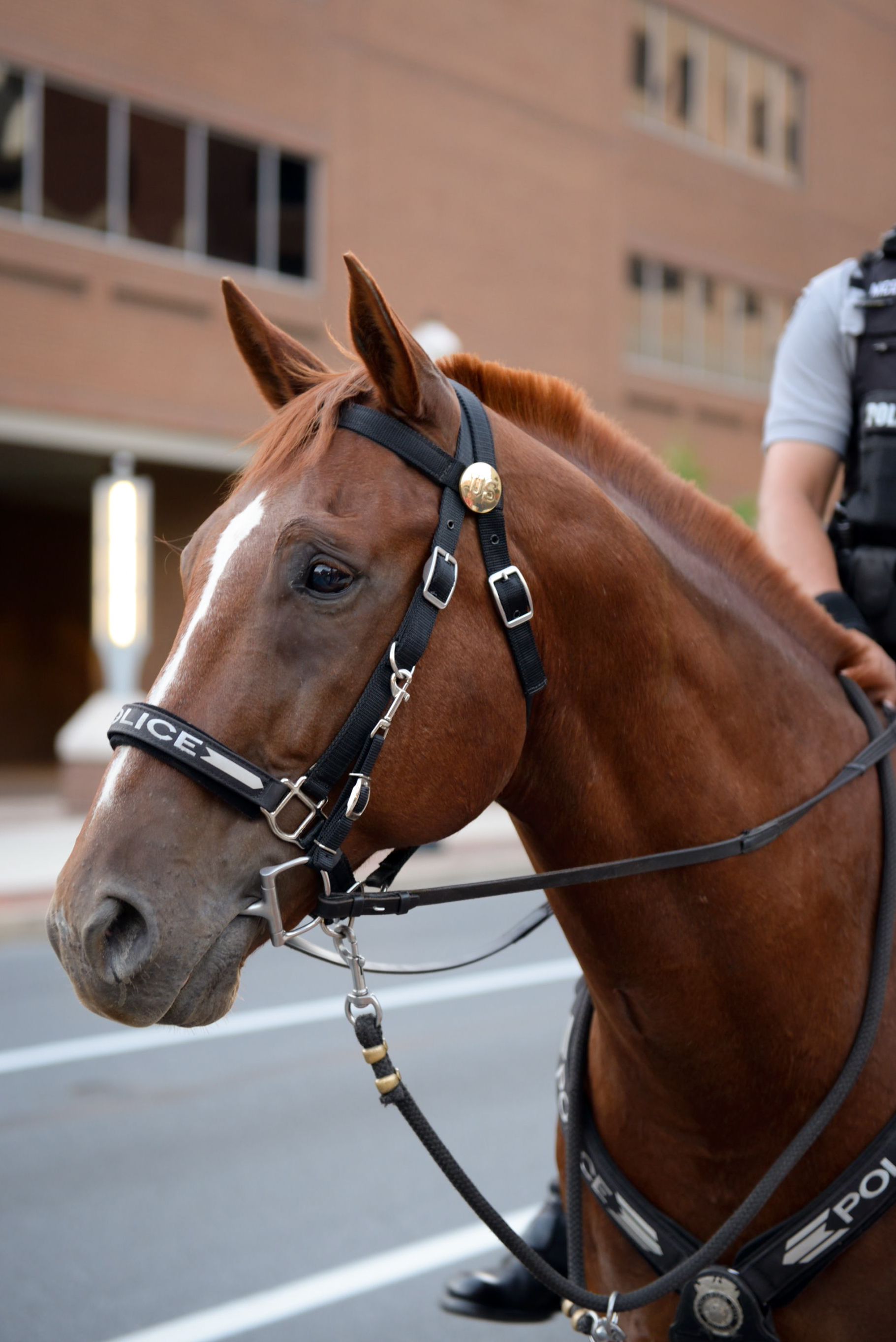 Police horse! (I couldn't resist taking this pic. She was just stunning.)