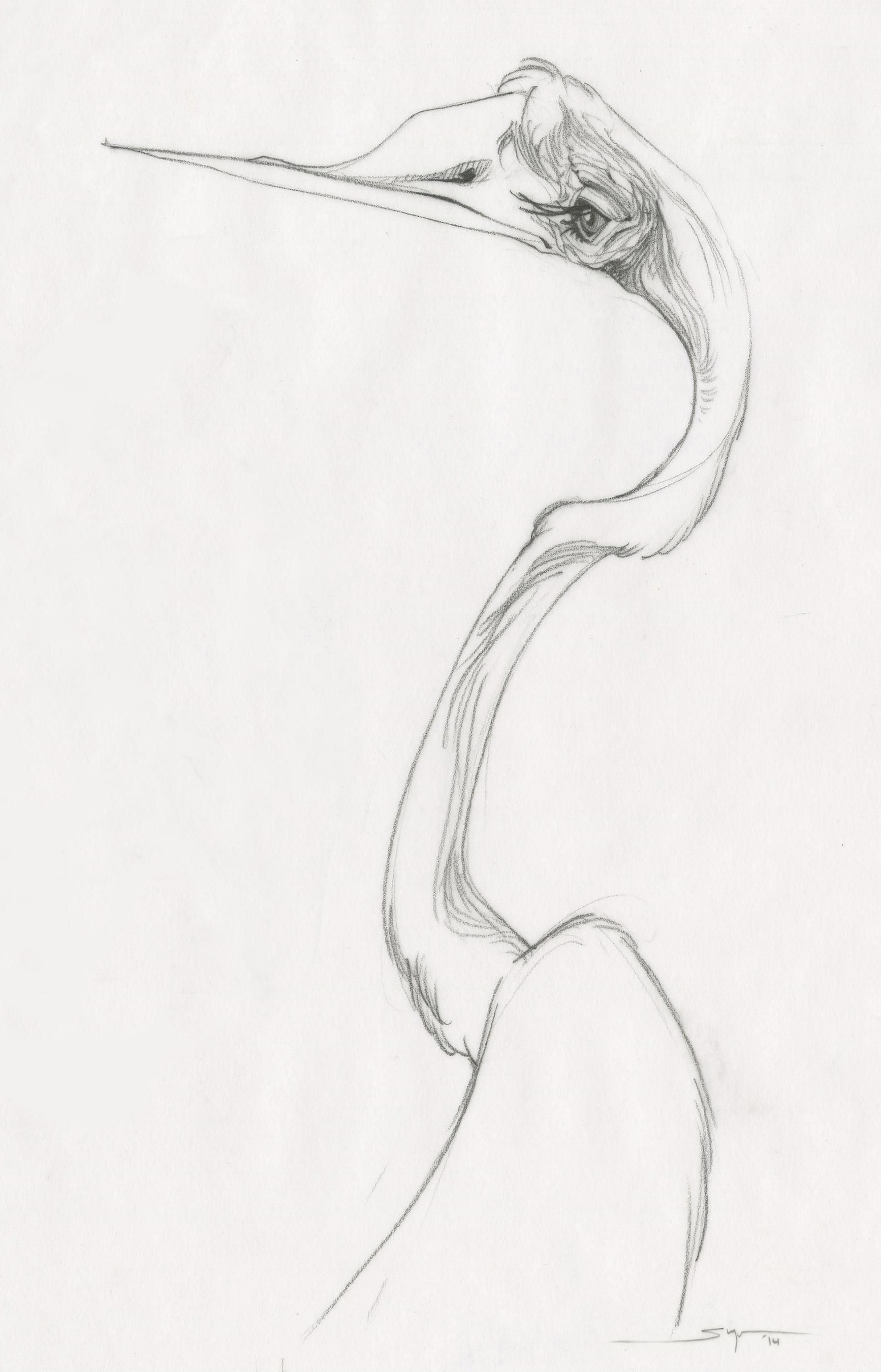 aSugano_ibis.jpg