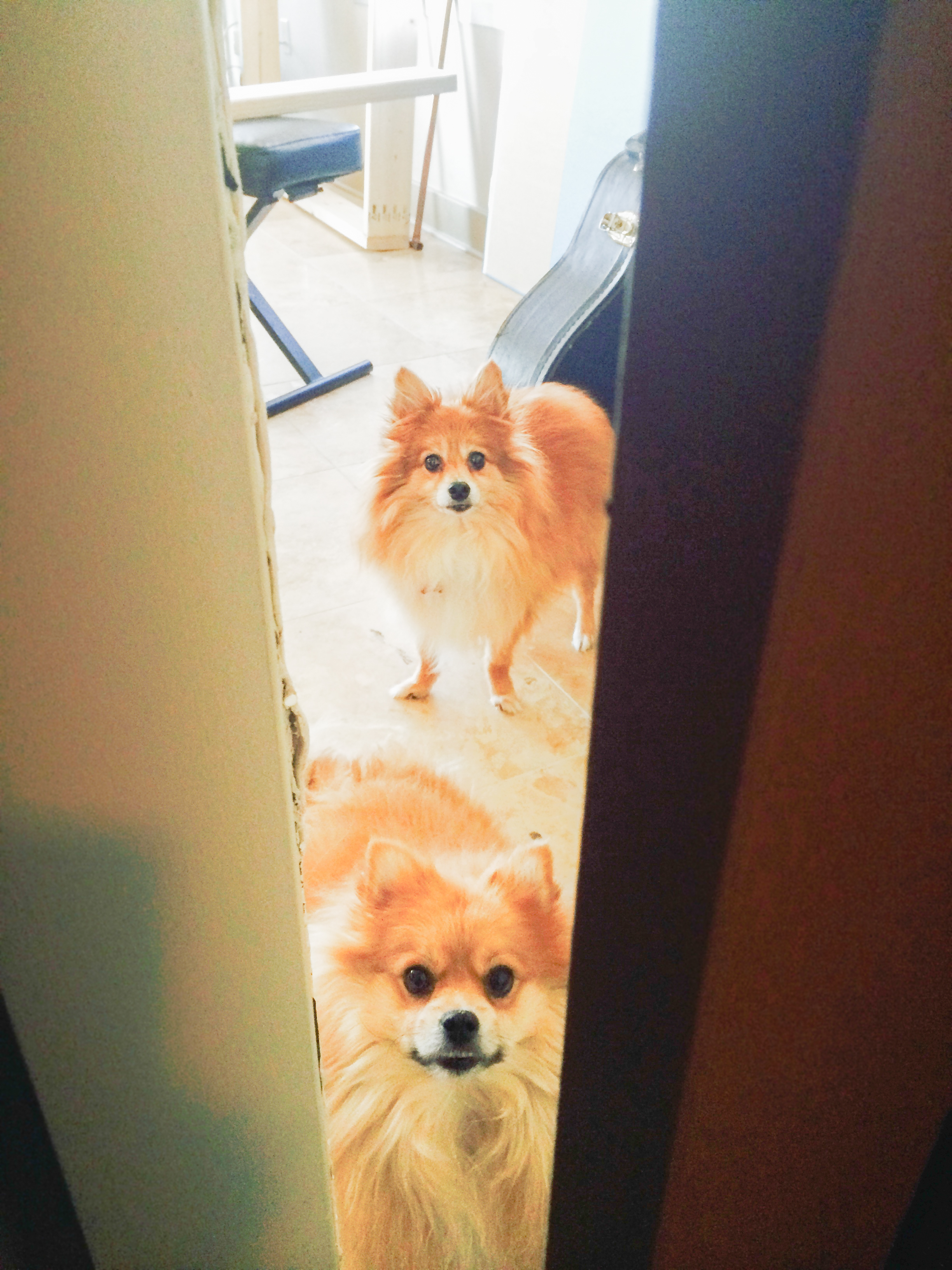 Two of the three pomeranian cuties that waited eagerly for us to come out of the studio every day (Teddy is the adorable 25lbs fur ball with an overbite and Halo is the sweet and crazy little fox in the back...love them!)
