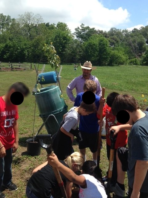Students planting another tree on the edge of the Butterfly Garden.