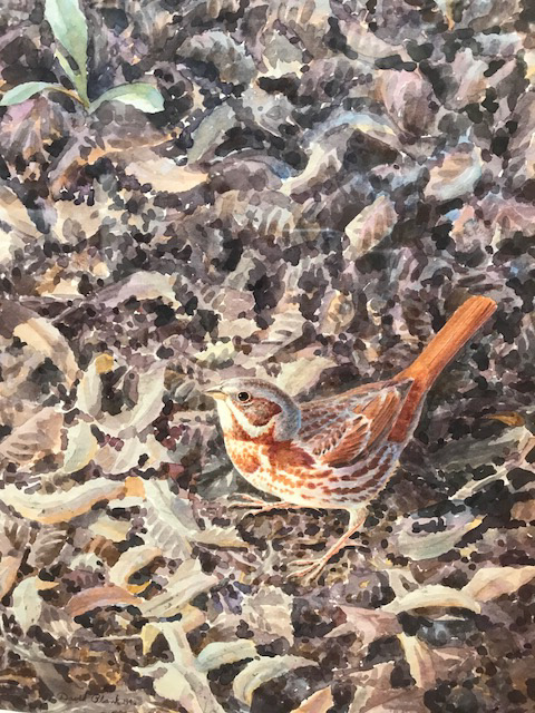 """Fox Sparrow"" watercolor by David Plank"