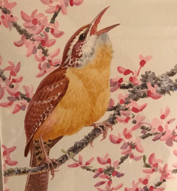 """Carolina Wren on Redbud"" watercolor by David Plank"